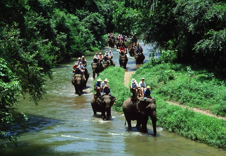 The Elephant Safari Park